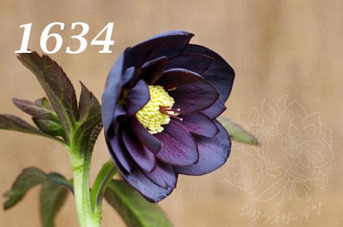 1634b.jpg