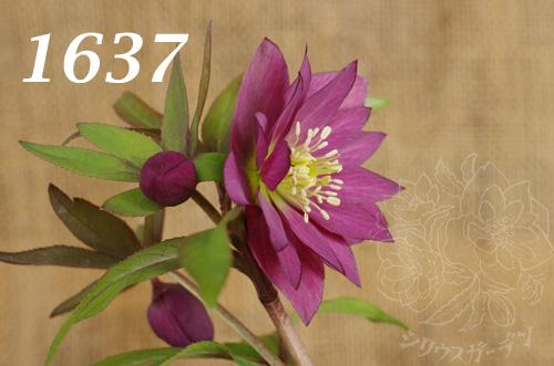 1637b.jpg