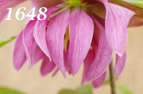 1648b.jpg