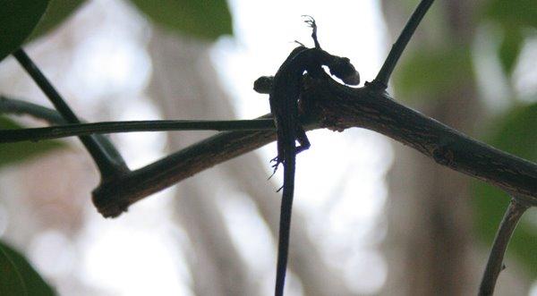 2012-01-08 万博自然文化園 002 モズ はやにえ 600×331