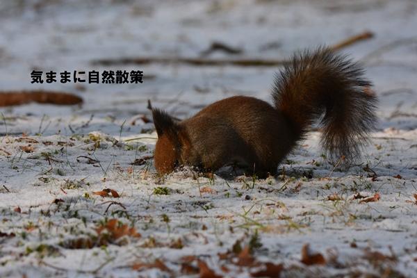 エゾリス研究林 (1)