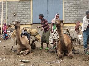 ethiopia2-4.jpg
