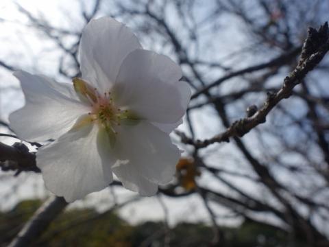 椿の咲く季節になりました
