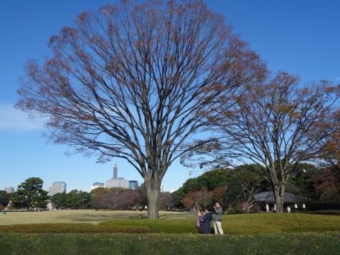 皇居東御苑も本格的な紅葉が始まりました