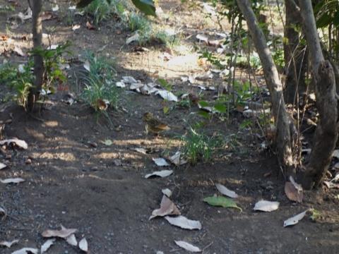 明治神宮の森を歩きました