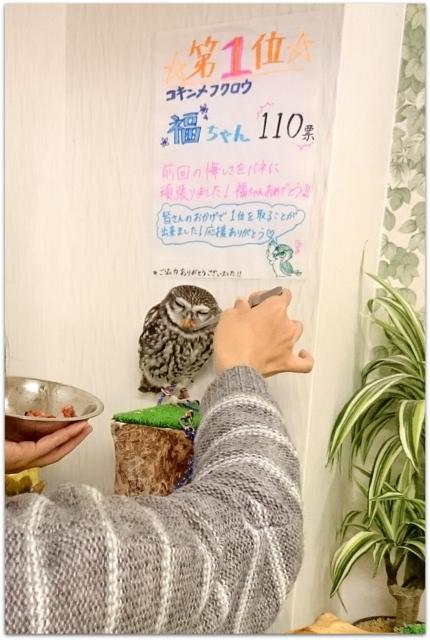 青森県 弘前市 ふくろうカフェ ふくろうの城 弘前店