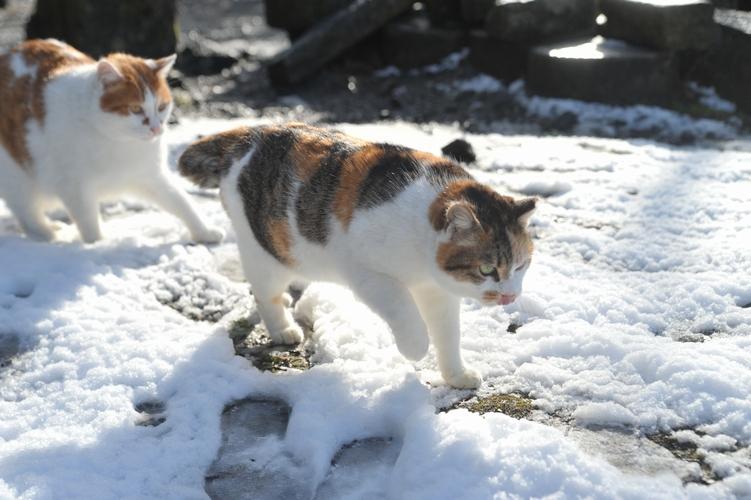 雪と三毛猫