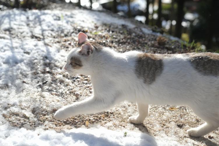 雪とキジ白