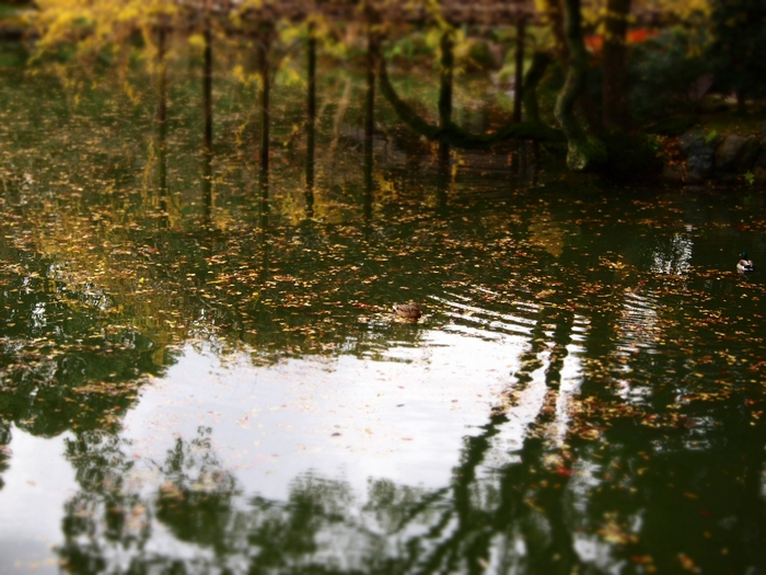 池鴨・ジオラマ