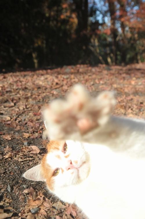 陽光/パンチ