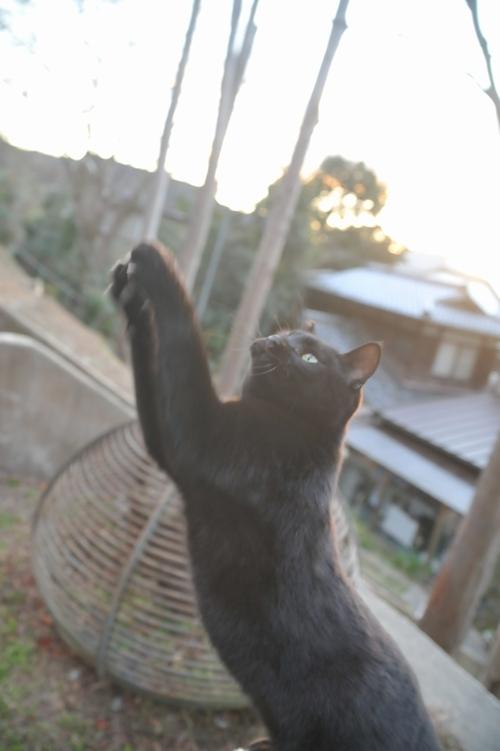 黒猫JUMP!