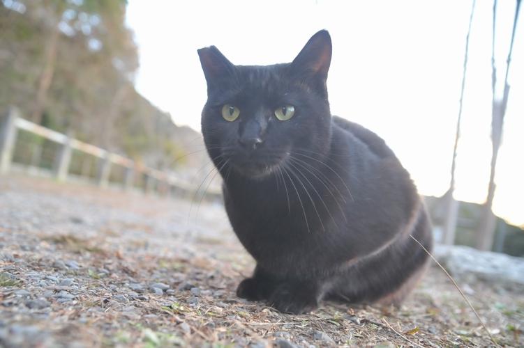 黒猫STAY!