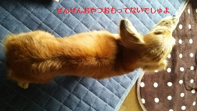 DSC_0371_20160221123151ea7.jpg