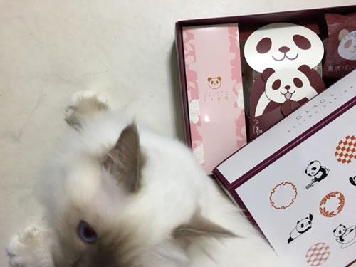 500375パンダのお菓子ミカエル4