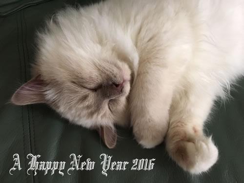 A Happy New Year 2016 ミカエル
