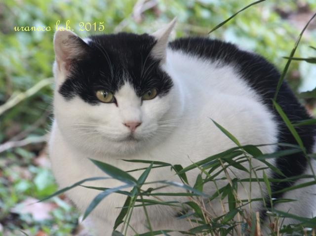 12月22日木陰の白黒猫