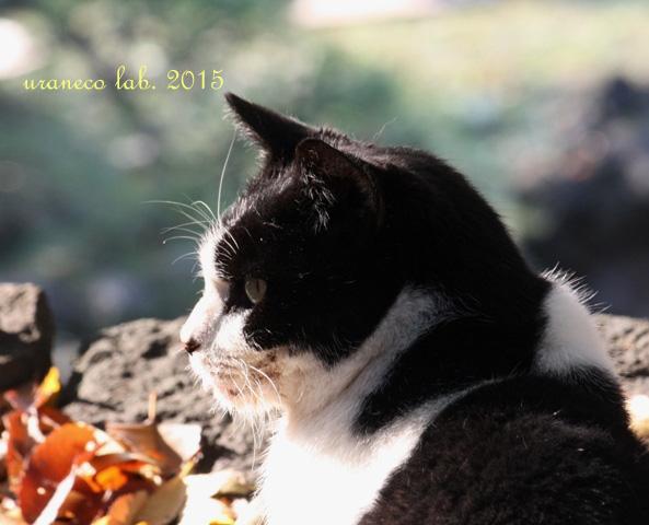 12月22日白黒冬を見つめる