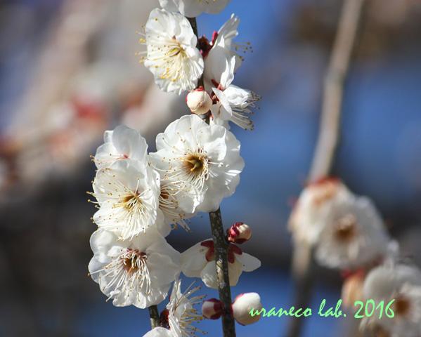 2月2日早春の香り3