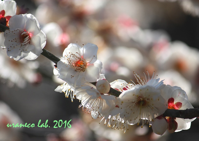 2月2日早春の香り
