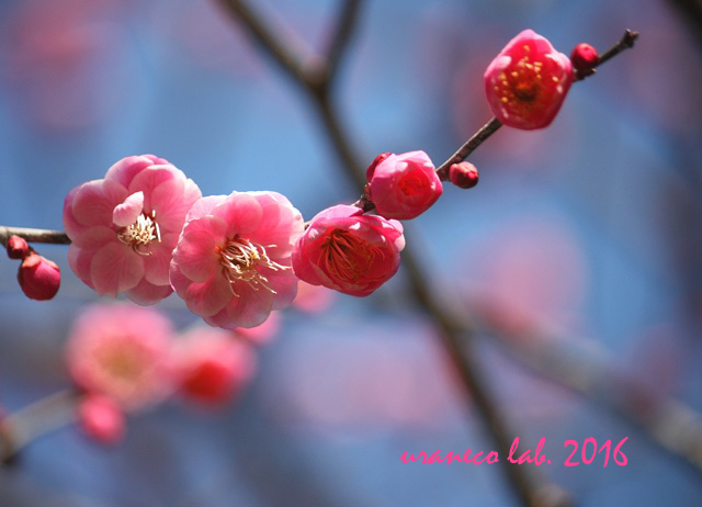2月2日早春の香り2