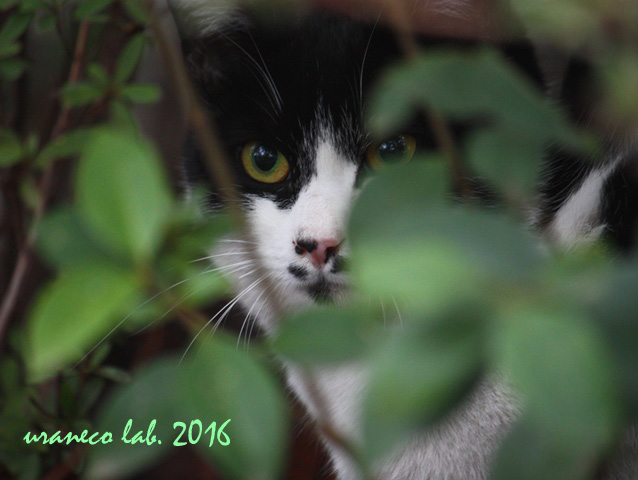3月4日ちょび髭猫