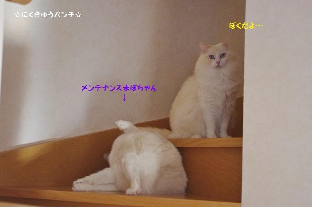 160105IMGP5254.jpg