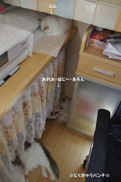 160309IMGP9489.jpg