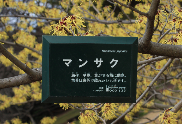 IMG_4201.jpg