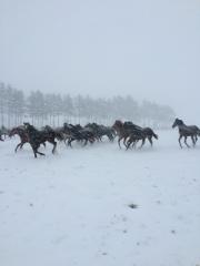 20151124 吹雪の中でも颯爽と雪上を駆け巡るレイクヴィラっ仔達^^;