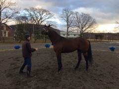 20151218 日高へ種牡馬視察!マジェスティックウォリアー!