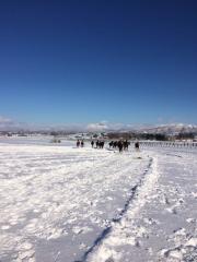 20151230 雪上を駆け抜ける牝馬達 1
