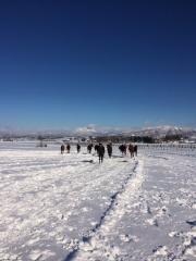 20151230 雪上を駆け抜ける牝馬達 2