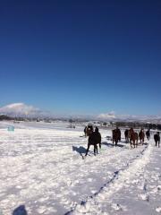 20151230 雪上を駆け抜ける牝馬達 3