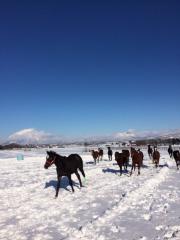 20151230 雪上を駆け抜ける牝馬達 4