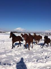 20151230 雪上を駆け抜ける牝馬達 5