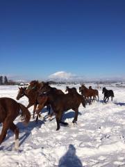 20151230 雪上を駆け抜ける牝馬達 6