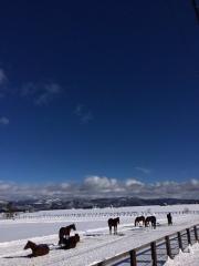 20160123 雪原で爆睡のレイクヴィラっ仔^^;