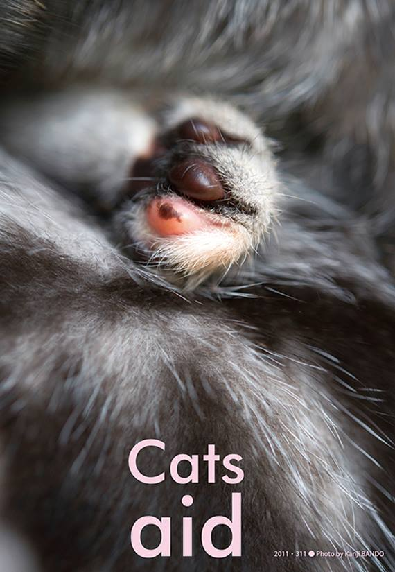 cats aid 2016