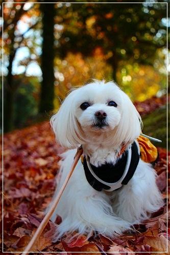 秋色散歩@すもも