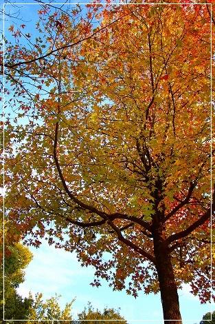 秋色の葉っぱがキレイです^^