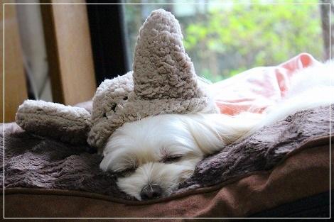 ウサギ、寝る^m^