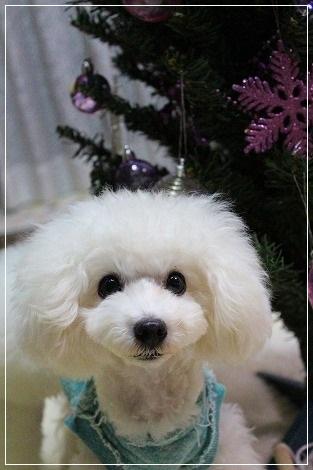 クリスマスツリー準備@ぐみ