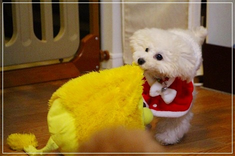 白犬宅急便・クリスマスバージョン③