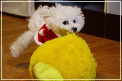 白犬宅急便・クリスマスバージョン①