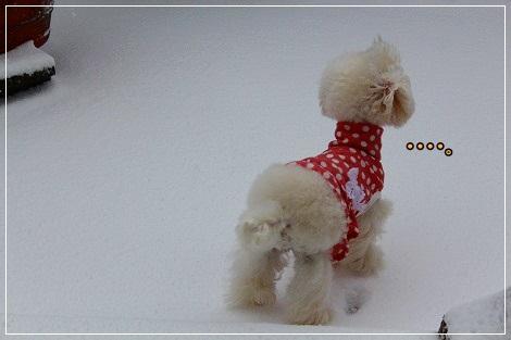 しばし雪の中で悩んで、