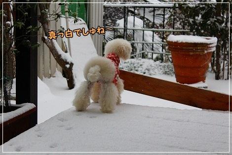 雪で真っ白だったよ!