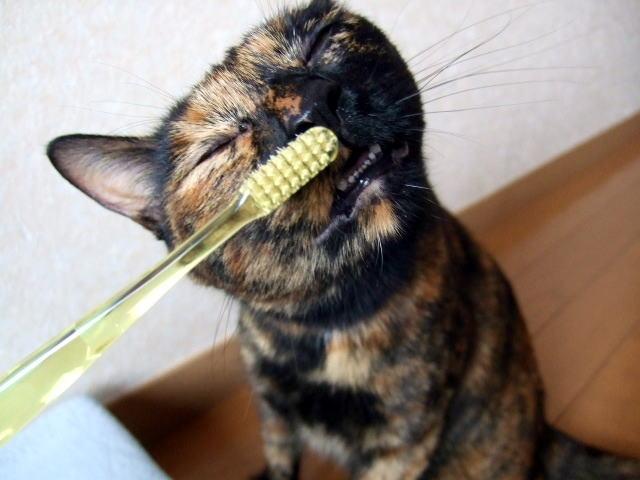 歯磨きネコ