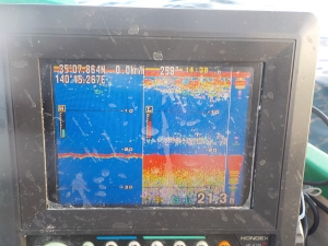 DSCN1470 上がウルメで下がアジ