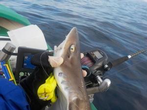 DSCN1686 サメー