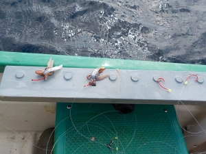 DSCN1704 ホタ針ホタルイカ鮭皮で